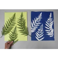 Cyanotype 15x15cm Cotton Squares Lime 10 Pack