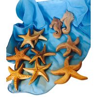Seahorse & Starfish Portable Play Jar